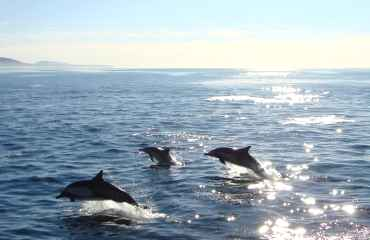 Mini Dolphin Tour