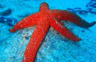 Snorkeling Costa Teguise