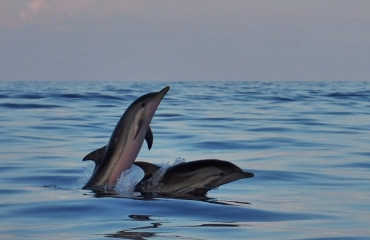 Dolphins & Sunset