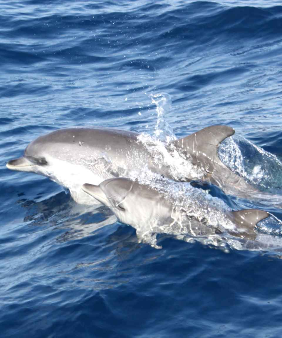 Boat Tour Dolphins & Sunset Lanzarote